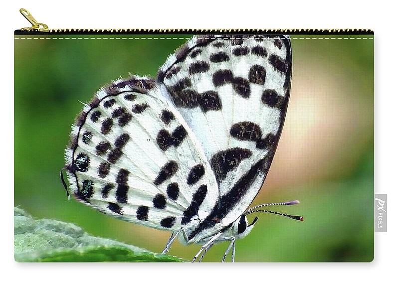 Common Carry-all Pouch featuring the photograph Common Pierrot Butterfly by Anthony Dezenzio