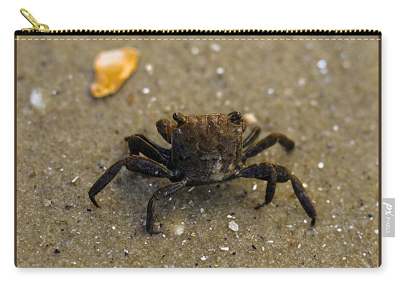 Sunset Carry-all Pouch featuring the photograph Curious Crab by Victoria Williams