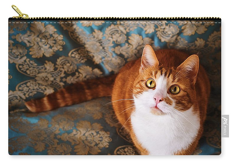 Pets Carry-all Pouch featuring the photograph Cute Cat Named Nisse by Knape