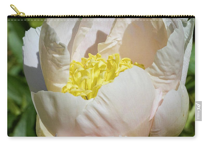 Peony Carry-all Pouch featuring the photograph Delicate Pastel Peach Cupped Peony Blossom by Kathy Clark