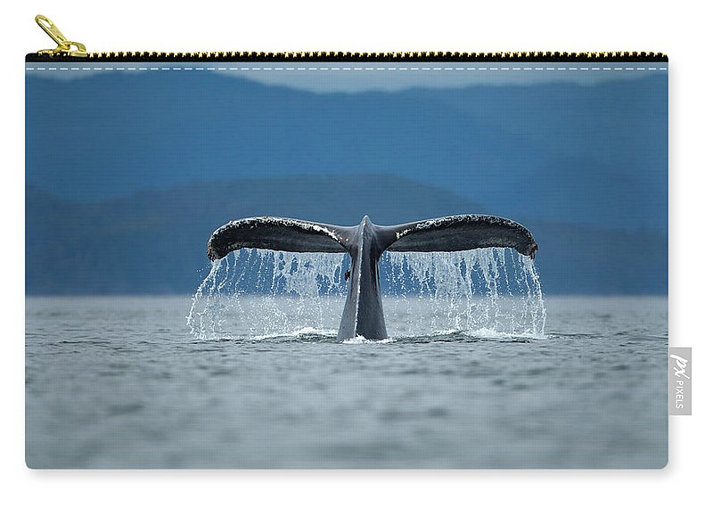 Diving Into Water Carry-all Pouch featuring the photograph Diving Humpback Whale, Alaska by Paul Souders