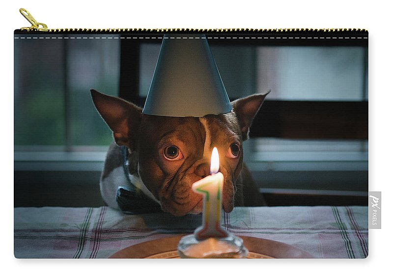 Pets Carry-all Pouch featuring the photograph Dog Celebrating Birthday by Samantha Lynn