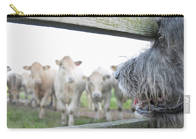 Alertness Carry-all Pouch featuring the photograph Dog Watching Cows Through Fence by Cecilia Cartner