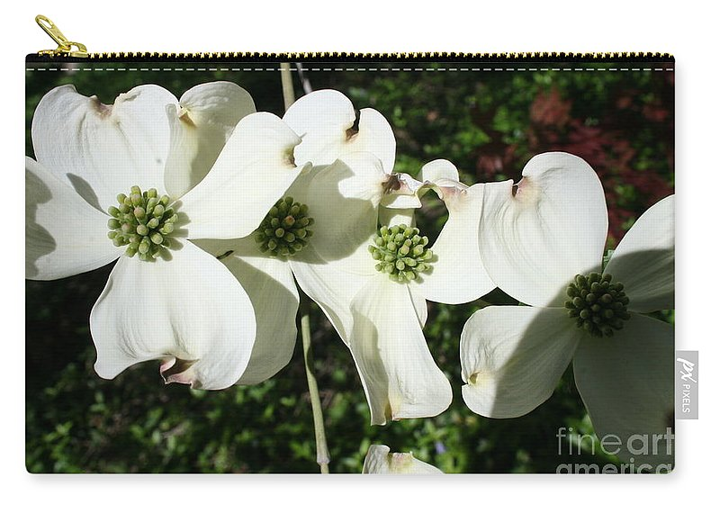 Highland Productions Llc  Darren Dwayne Frazier  White Petals Dogwood  Green Back Ground  Sunny Day Carry-all Pouch featuring the photograph Dogwood V 2019 by Darren Dwayne Frazier