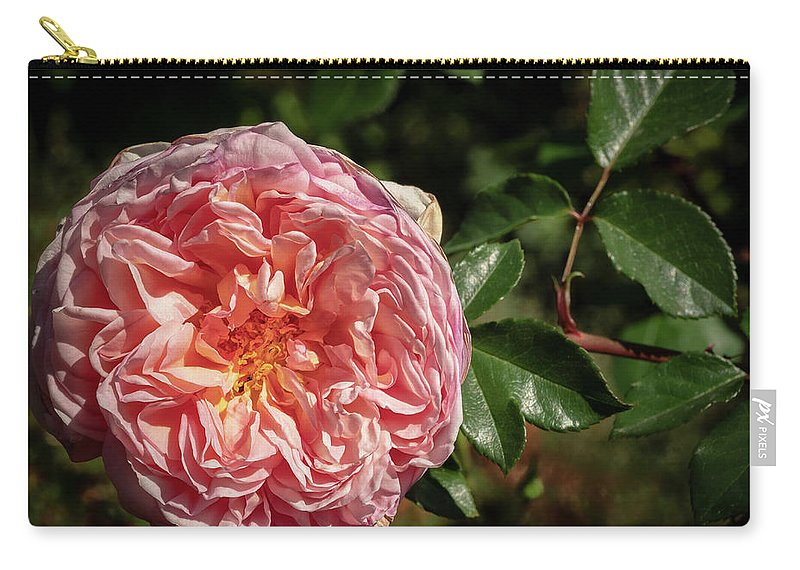 Flower Carry-all Pouch featuring the photograph Evelyn Rose by Jean Noren