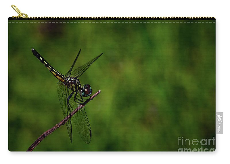 Insect Carry-all Pouch featuring the photograph Female Blue Dasher Dragonfly by Blair Howell