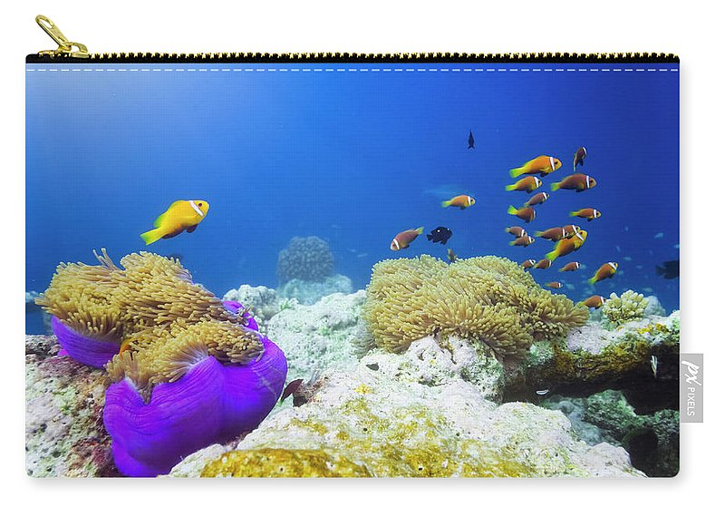 Underwater Carry-all Pouch featuring the photograph Finding Nemo by Cinoby