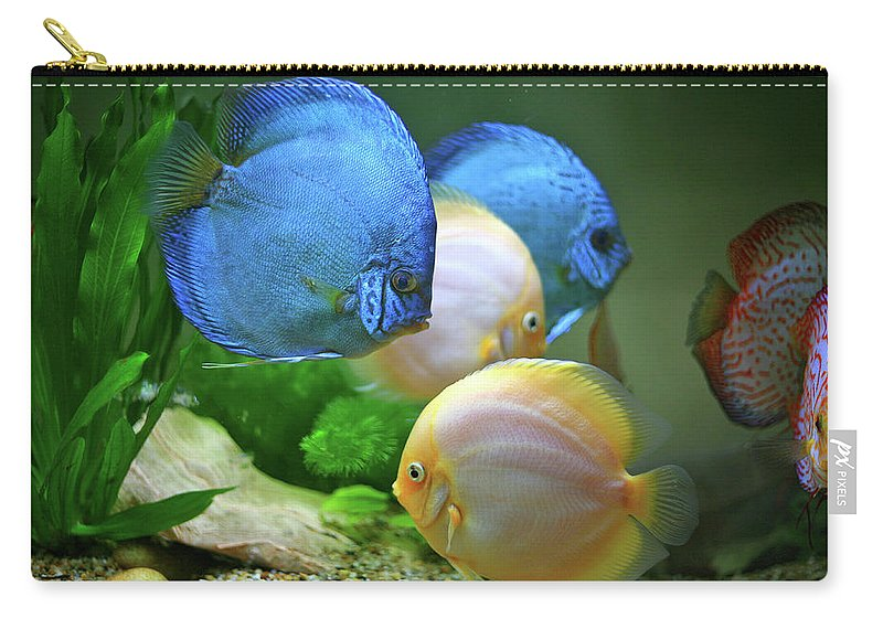 Underwater Carry-all Pouch featuring the photograph Fish In Water by Vietnam