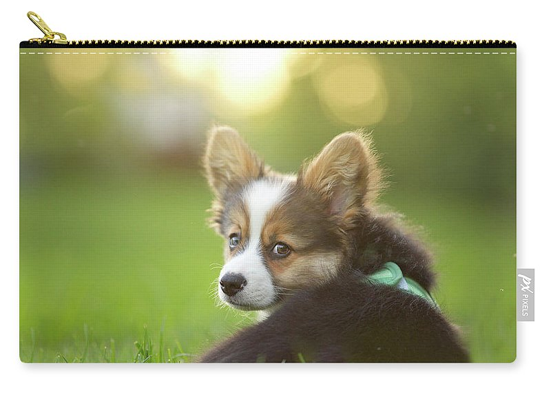 Pets Carry-all Pouch featuring the photograph Fluffy Corgi Puppy Looks Back by Holly Hildreth