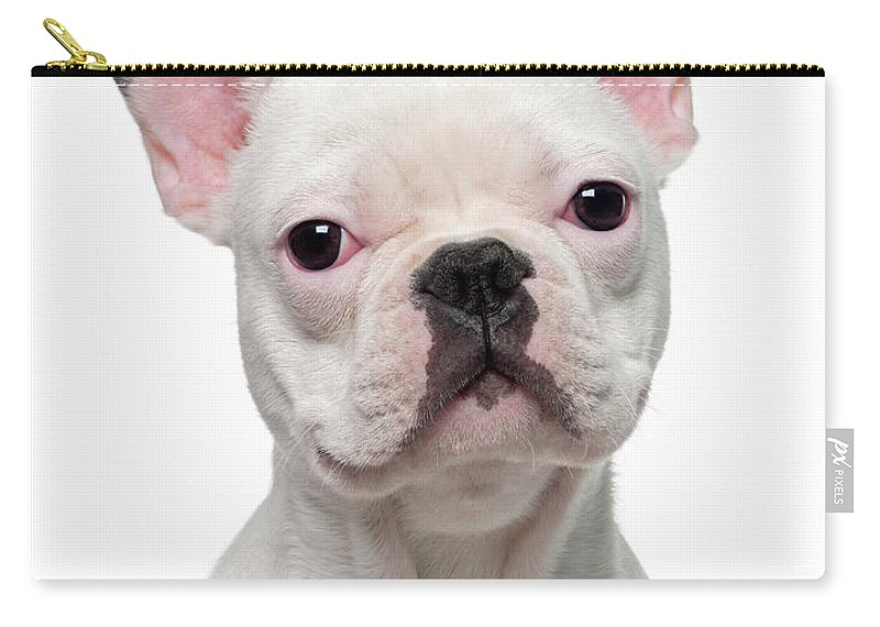 Pets Carry-all Pouch featuring the photograph French Bulldog Puppy 5 Months Old by Life On White