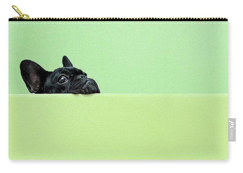 Pets Carry-all Pouch featuring the photograph French Bulldog Puppy by Retales Botijero