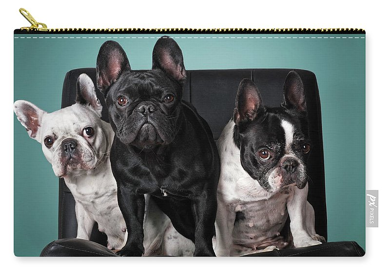 Pets Carry-all Pouch featuring the photograph French Bulldogs by Retales Botijero
