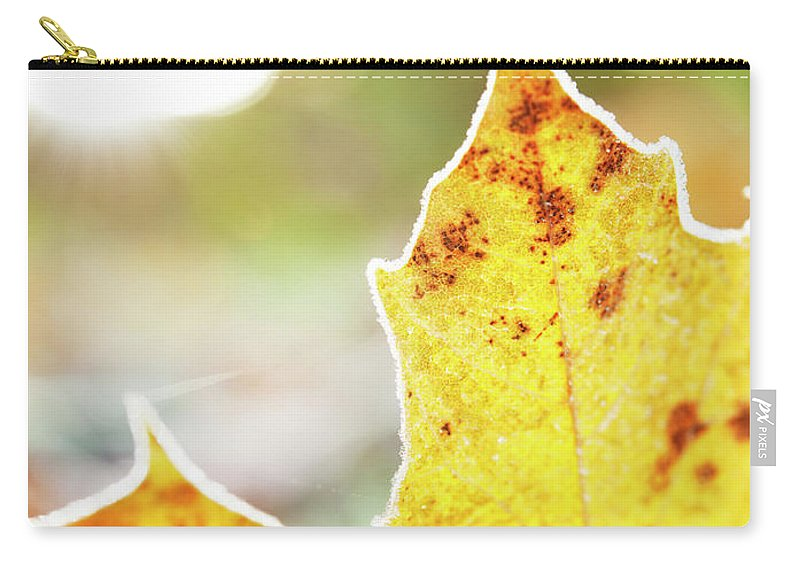 Scenics Carry-all Pouch featuring the photograph Frost On Autumn Leaf, Detail by Johner Images