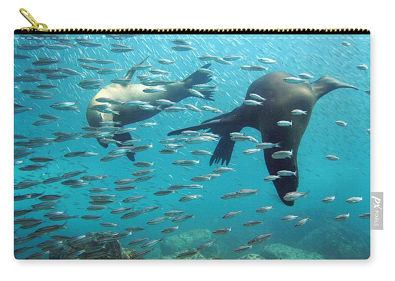Underwater Carry-all Pouch featuring the photograph Galapagos Sea Lion by Bettina Lichtenberg