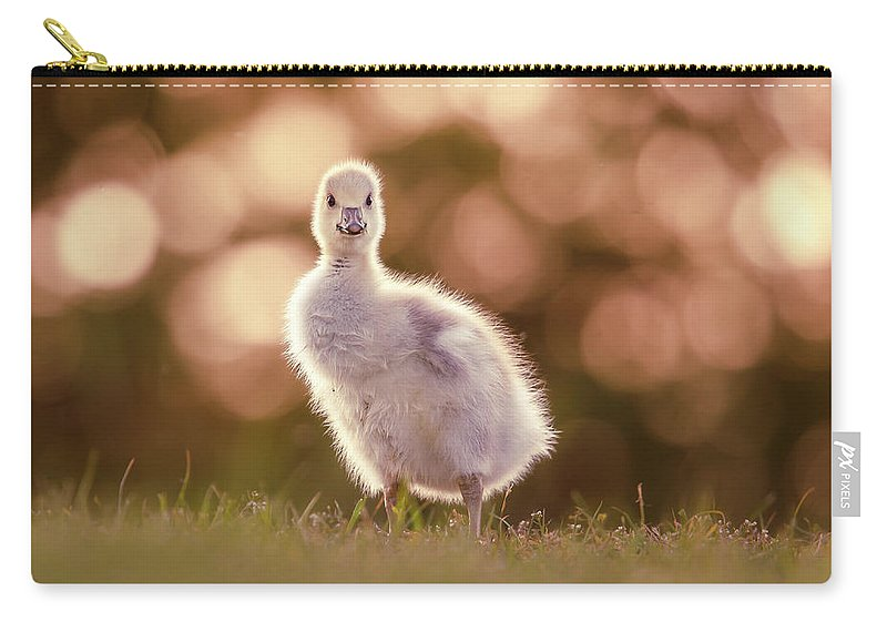 Gosling Carry-all Pouch featuring the photograph Glosling - The Glowing Gosling by Roeselien Raimond