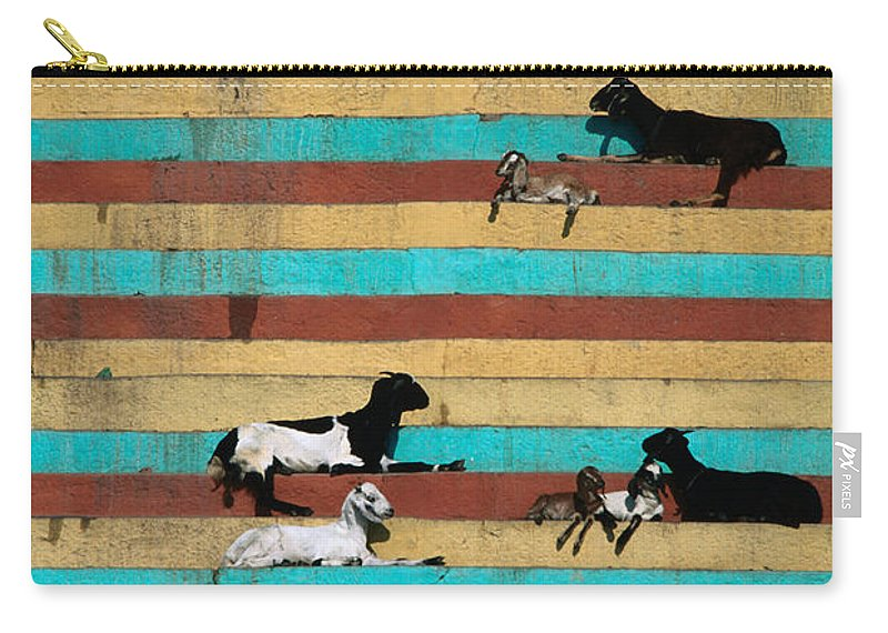 Steps Carry-all Pouch featuring the photograph Goats Resting On The Tulsi Ghats by Anders Blomqvist