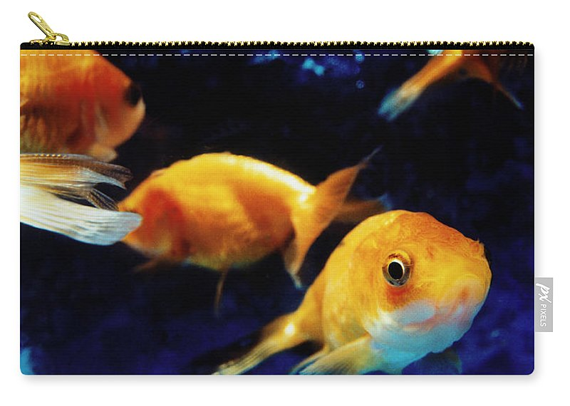 Pets Carry-all Pouch featuring the photograph Goldfish In Fish Tank by Silvia Otte