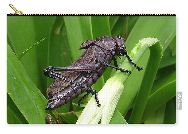 Carry-all Pouch featuring the photograph Grasshopper by Stanley Vreedeveld