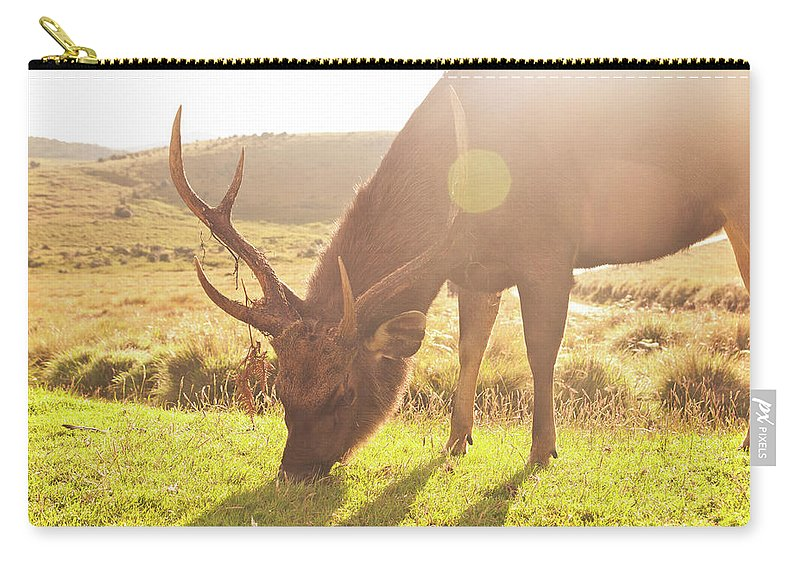 Horned Carry-all Pouch featuring the photograph Grazing Deer by Flash Parker