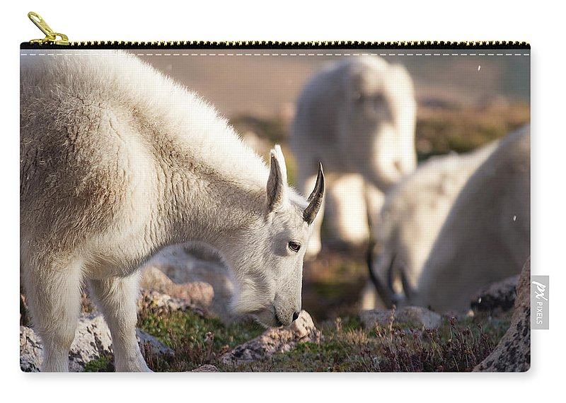 2016 Carry-all Pouch featuring the photograph Grazing On Mount Evans by Cary Leppert