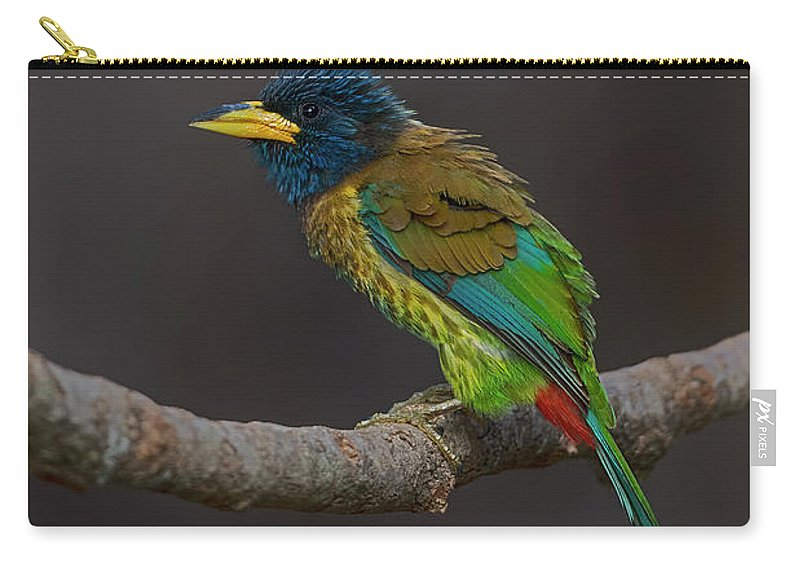Bird Images For Print Carry-all Pouch featuring the photograph Great barbet by Uma Ganesh
