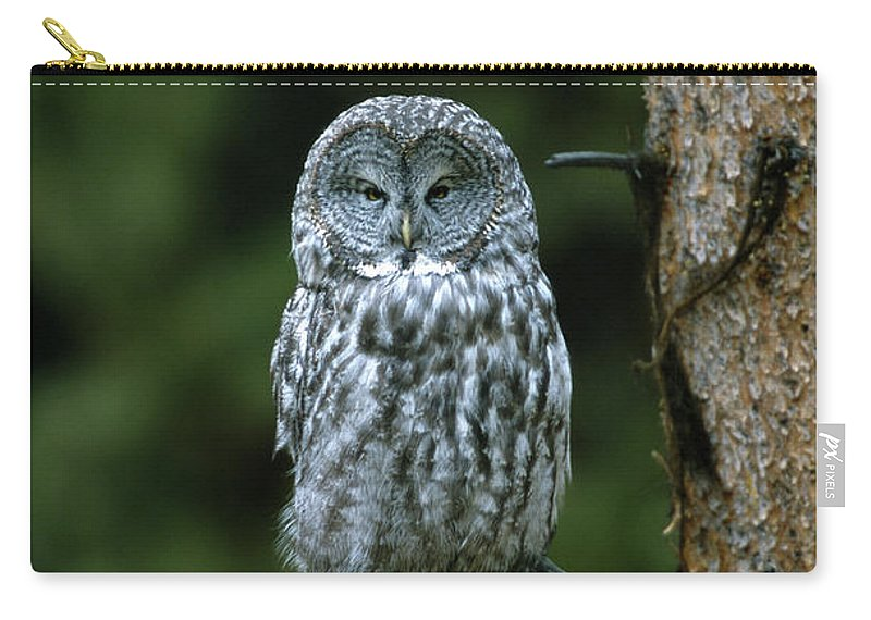 Great Gray Owl Carry-all Pouch featuring the photograph Great Gray Owl Strix Nebulosa On Perch by Riccardo Savi
