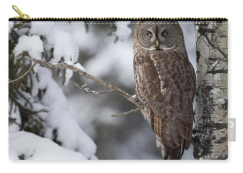 Snow Carry-all Pouch featuring the photograph Great Grey Owl by Corey Hayes