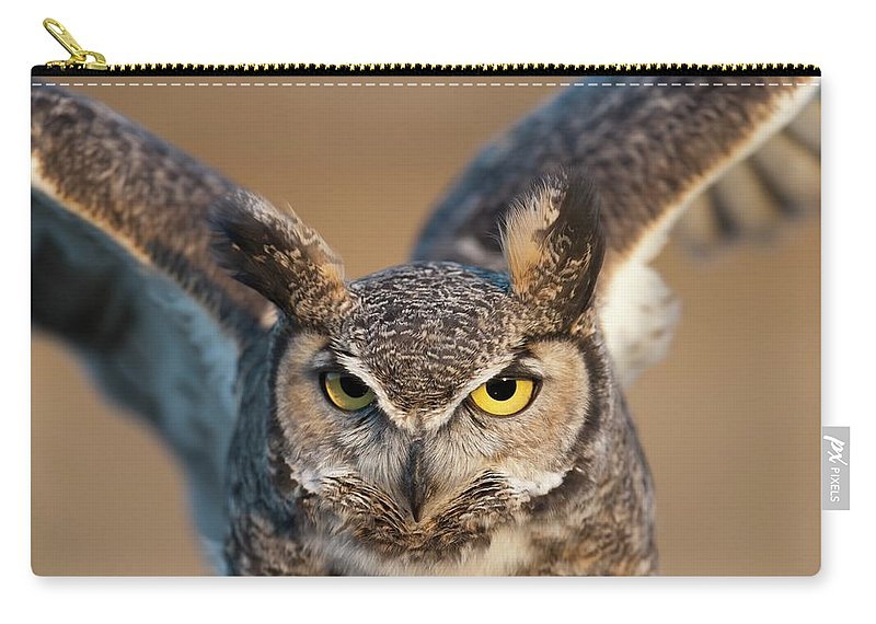 Bird Of Prey Carry-all Pouch featuring the photograph Great-horned Owl Bubo Virginianus by Design Pics / David Ponton