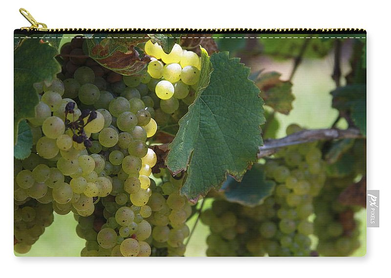 Green Grapes Carry-all Pouch featuring the photograph Green Grapes On The Vine 10 by Cathy Lindsey