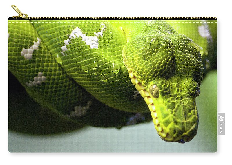 Toronto Carry-all Pouch featuring the photograph Green Snake Curled And Resting by Gail Shotlander