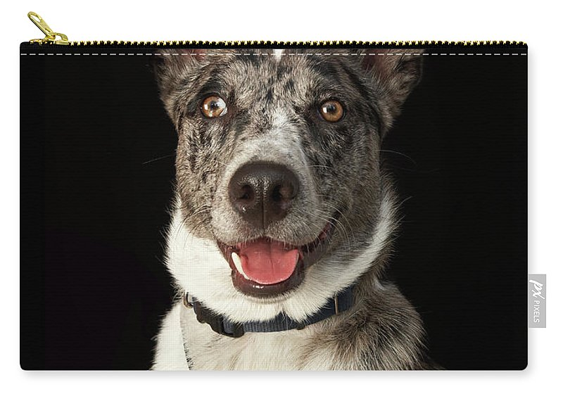Pets Carry-all Pouch featuring the photograph Grey And White Australian Shepherd With by M Photo