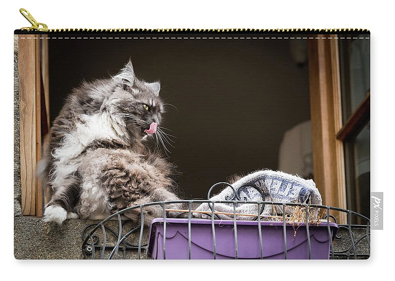 Window Carry-all Pouch featuring the photograph Grey Long Haired Cat Sitting On A Window Sill by Stefan Rotter