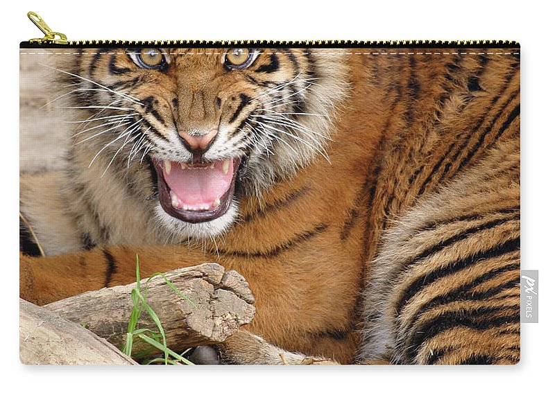 Snarling Carry-all Pouch featuring the photograph Growling Tiger by S. Greg Panosian