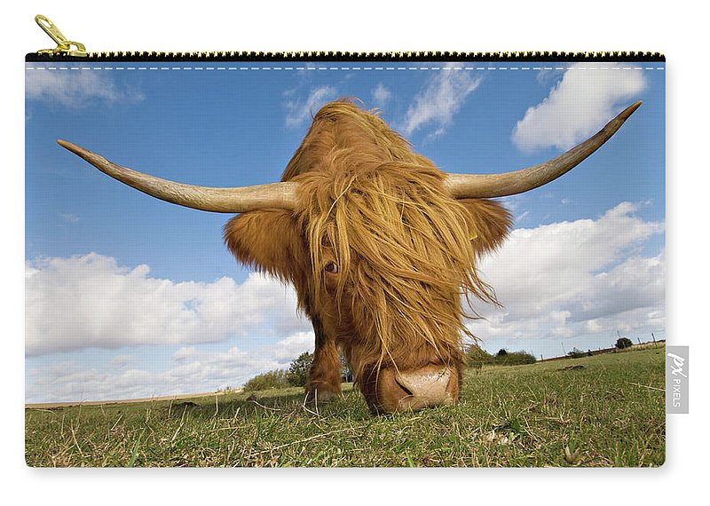 Horned Carry-all Pouch featuring the photograph Hairy, Horned, Highland Cow Grazing by Clarkandcompany