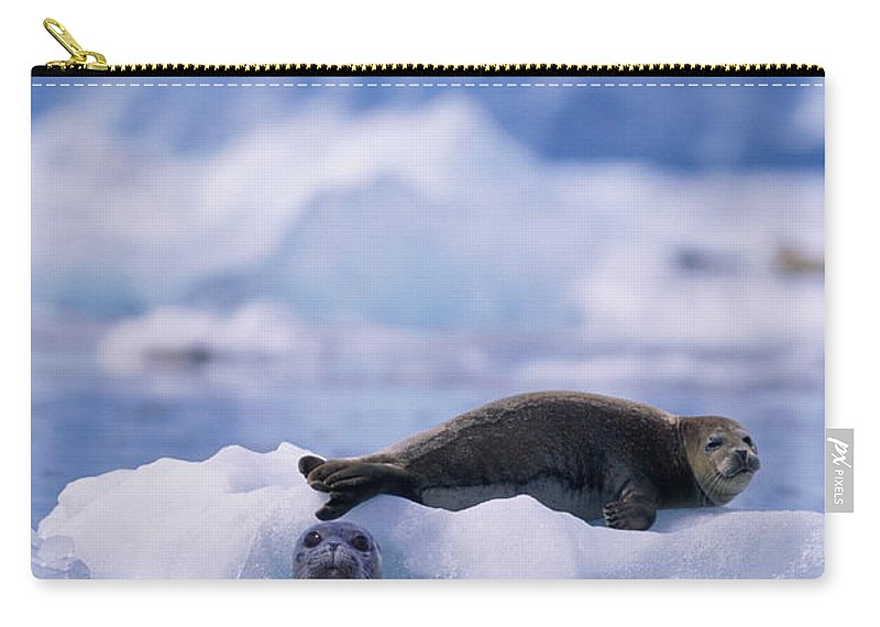 Animal Themes Carry-all Pouch featuring the photograph Harbor Seal Phoca Vitulina In Glacial by Paul Souders