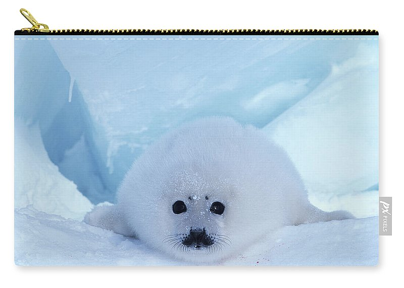 Iles De La Madeleine Carry-all Pouch featuring the photograph Harp Seal Phoca Groenlandica by Art Wolfe