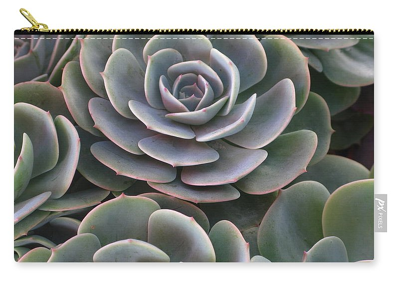 Scenics Carry-all Pouch featuring the photograph Hens And Chicks Plant Full Frame by Sassy1902