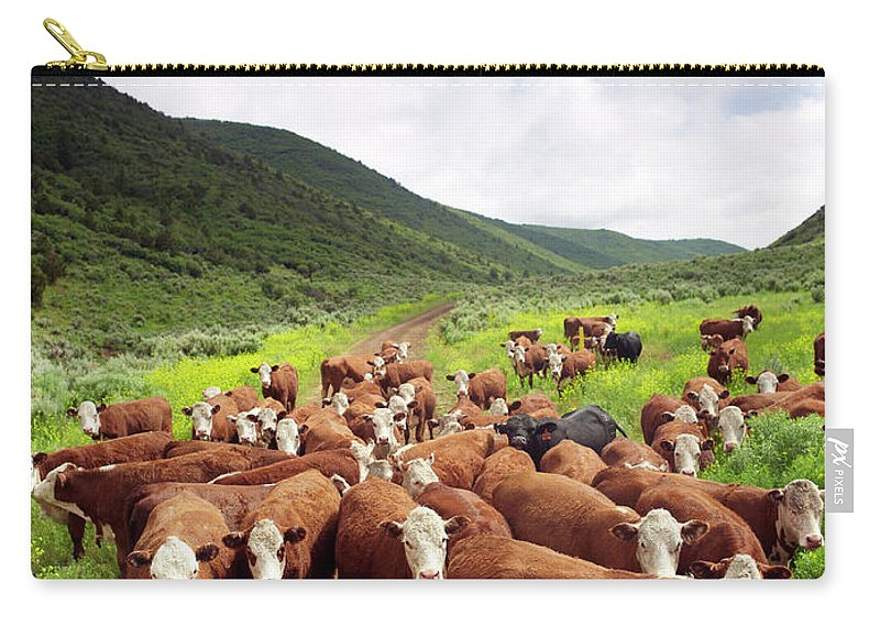 Shadow Carry-all Pouch featuring the photograph Hereford Cattle In High Pasture by John P Kelly