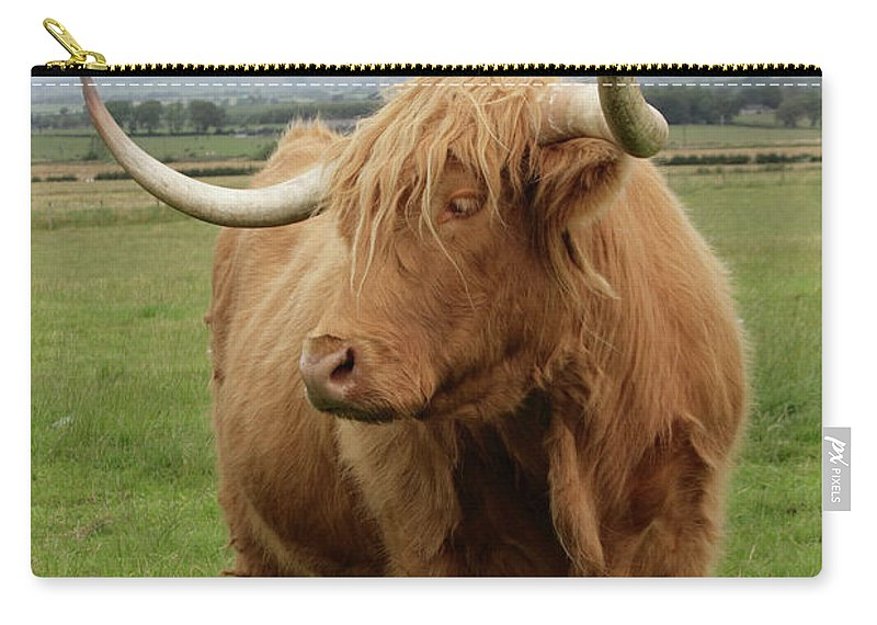 Horned Carry-all Pouch featuring the photograph Highland Cattle by Thyme