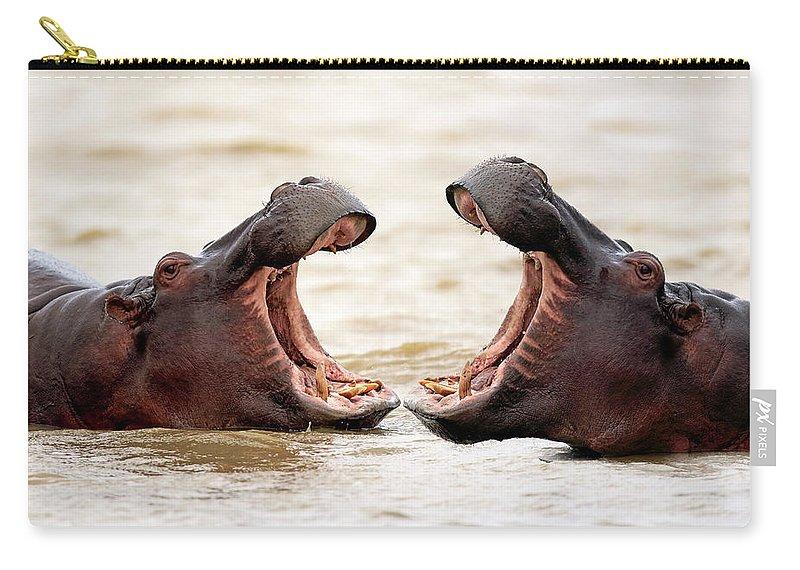Isimangaliso Wetland Park Carry-all Pouch featuring the photograph Hippopotamus by Tier Und Naturfotografie J Und C Sohns