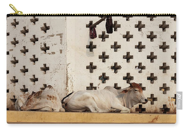 Hanging Carry-all Pouch featuring the photograph Holy Cows Resting With Geometrical by Marji Lang