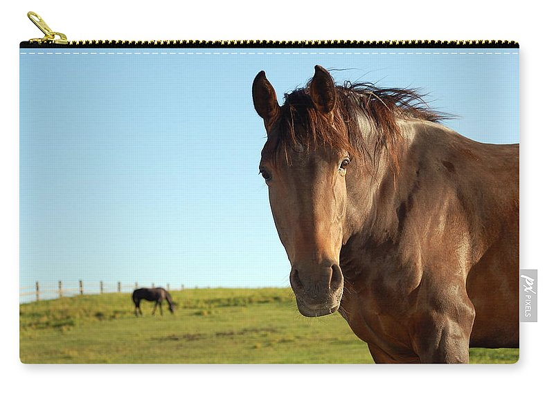Horse Carry-all Pouch featuring the photograph Horse by Esemelwe