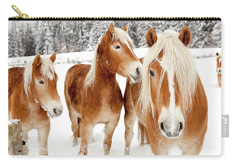 Horse Carry-all Pouch featuring the photograph Horses In White Winter Landscape by Angiephotos