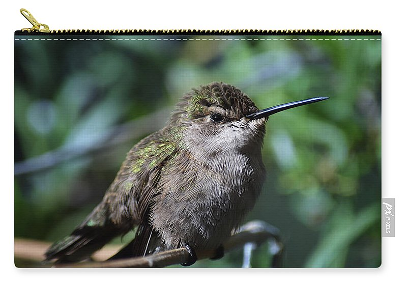 Hummingbird Carry-all Pouch featuring the photograph Hummer by Tashina Van Zwam