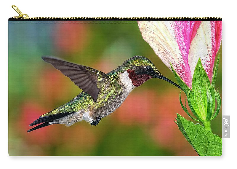 Animal Themes Carry-all Pouch featuring the photograph Hummingbird Feeding On Hibiscus by Dansphotoart On Flickr
