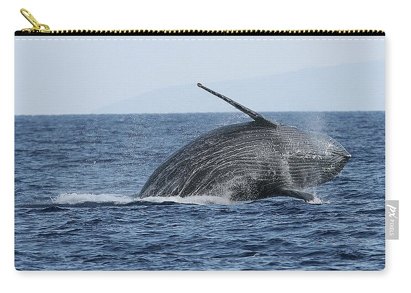 Animal Carry-all Pouch featuring the photograph Humpback Whale Breach 2 Of 3 by Adwalsh