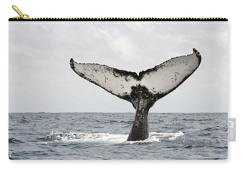 Animal Themes Carry-all Pouch featuring the photograph Humpback Whale Tail by Photography By Jessie Reeder