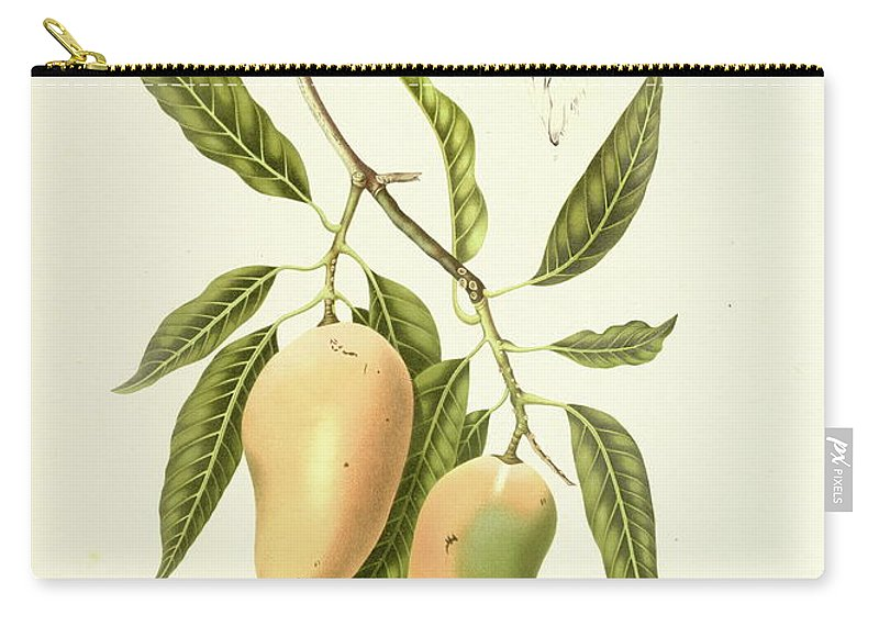 Artist Carry-all Pouch featuring the digital art Indian Mango | Antique Plant by Nicoolay