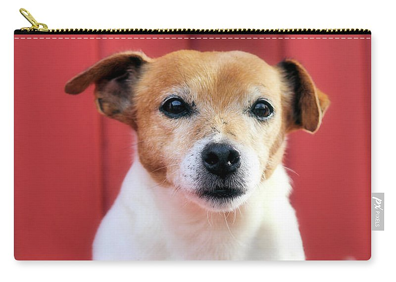 Jack Russell Carry-all Pouch featuring the photograph Jake 2 by Robert McCubbin