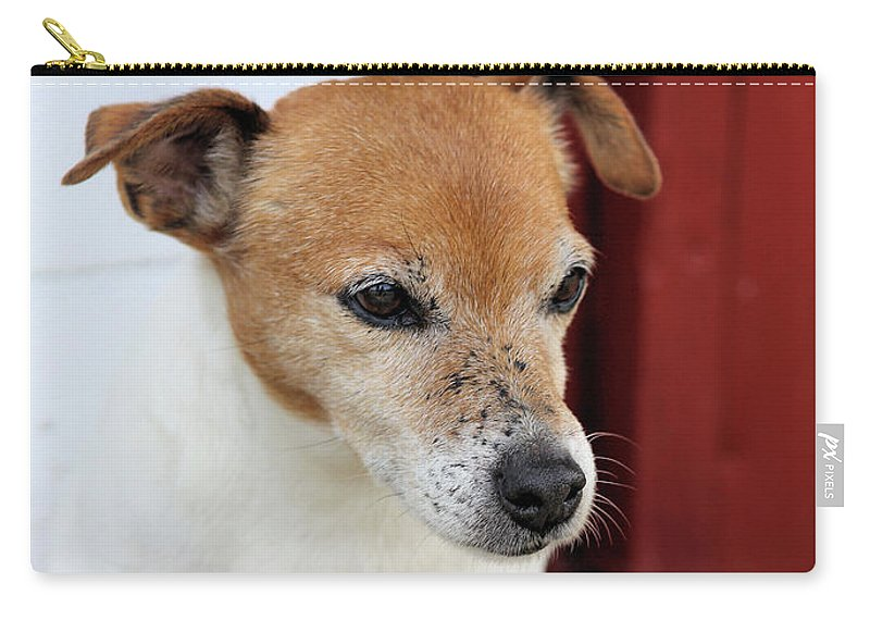 Jack Russell Carry-all Pouch featuring the photograph Jake by Robert McCubbin